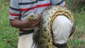 Anakonda: Yılanların Kraliçesi fotoğraf