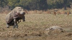 Hippo Stakeout photo