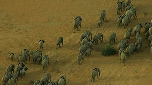 Mali Elephants photo