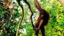 Borneo emisija