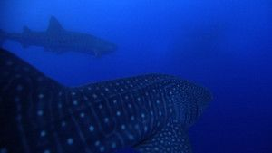 Baleias fotografia