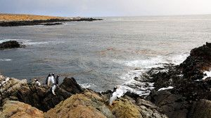 Falkland Islands photo