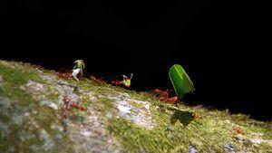 Mravenec legionář fotografie