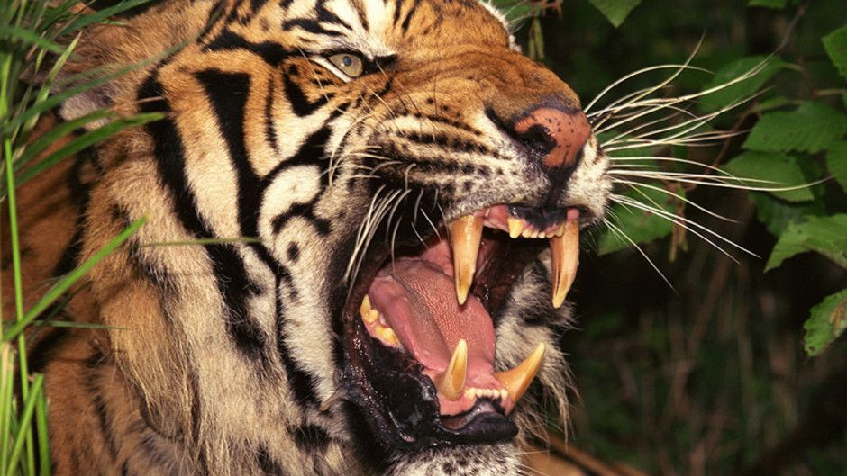 World's Deadliest Animals Photos - World's Deadliest ...