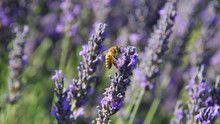 Arıların Sessizliği SAYFAYA GİT