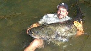 O Peixe-Gato Gigante fotografia