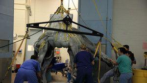 T. Rex trauma fotó