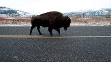Yellowstone Spring show