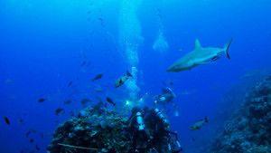 Shark Bait photo