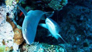 Návnada na žraloka fotografie