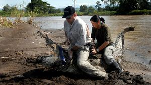 Mystère du crocodile aveugle photo