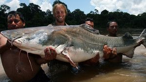 Colossal Catfish Foto