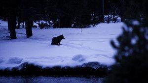 Sur les traces du loup photo