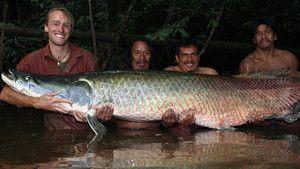 Amazon Giant Foto