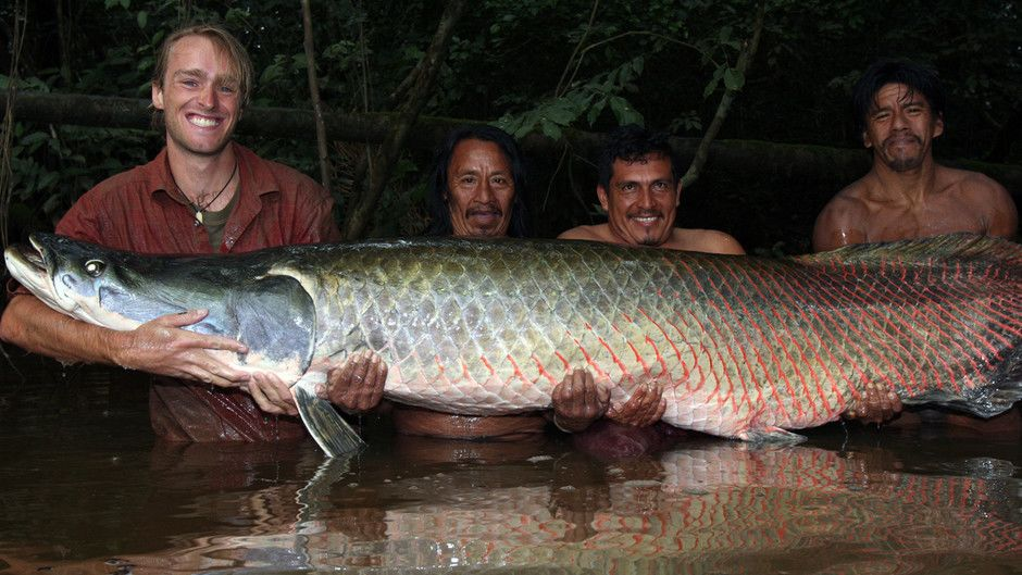 док фильм рыбалка на амазонке