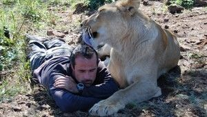 Kevin Richardson et les félins photo