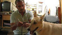 Pesky Canines show