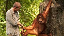Aapmensen van Sumatra Programma