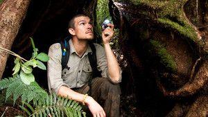 O hobbit de Sumatra fotografia