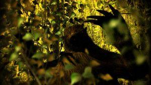 Amazonská noční můra fotografie