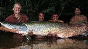 Le monstre de l'Amazone photo