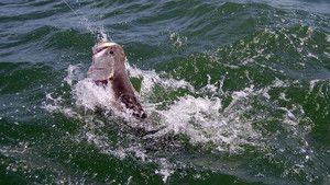 Le mammouth du Nil photo