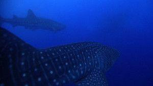 לווייתנים תמונה