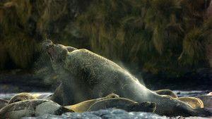 פילי ים תמונה