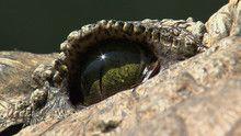 Close Ups show