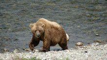Ландшафты Аляски программа
