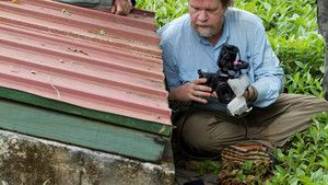Insectos e pólens fotografia