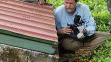 Insectos e pólens programa