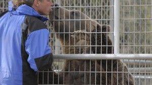 Niedźwiedź z Hollywood zdjęcie