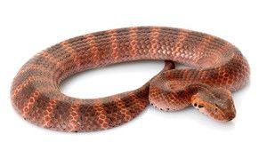 Serpents mortels photo