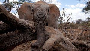 Elefantes Órfãos fotografia