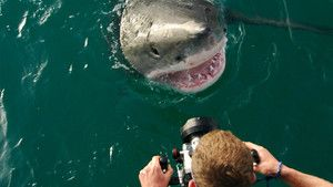 L'attaque des requins photo