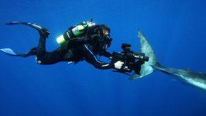 L'attaque des requins photo
