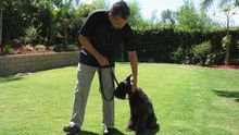 Dog Whisperer 3 Episodes 16-20 show