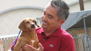 Dog Whisperer 3 Episodes 16-20 photo