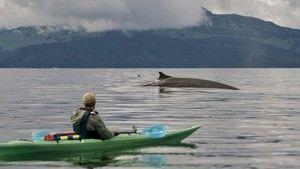Nagy Alaszka fotó