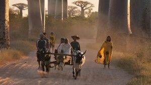 Madagaszkár szellemei fotó