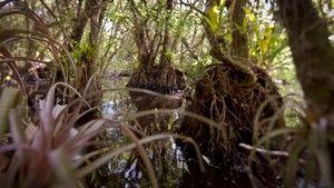 Veszélyes Everglades fotó