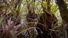 Veszélyes Everglades film