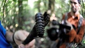 Az elveszett esőerdő fotó