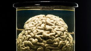 Mysterious Brain photo