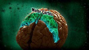 Den mystiske hjernen Bilde