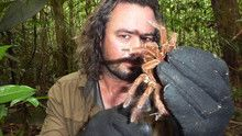 Spider Terror show