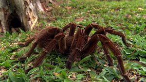 Spider Terror photo