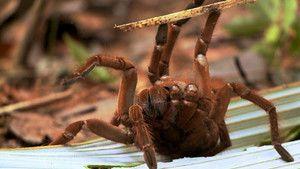 Horrorspinnen Foto