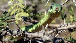 مشاهده کشنده ترین حیوانات جهان ، عکس عکس